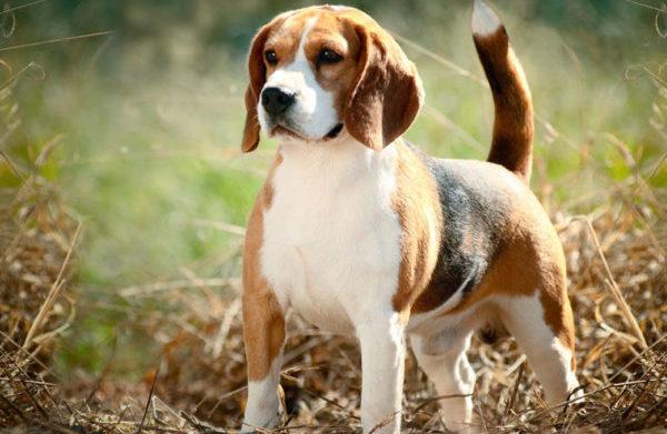 Кормить собаку обязательно нужно следующим образом: в одно и то же время, основываясь на возрасте и весе питомца