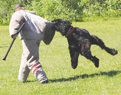Нападала собака чаще всего по приказу хозяина, к которому, кстати, отношение животного было настолько послушным и подобострастным