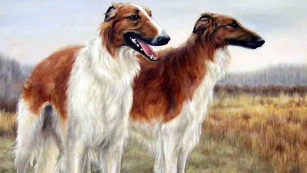 Считается, что борзые собаки более других подвержены циррозу