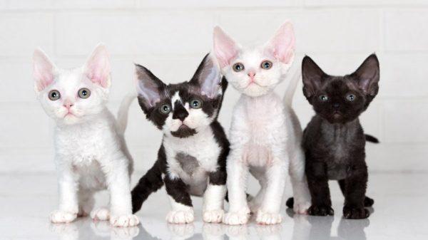 Посмотрите, насколько разными могут быть эти коты