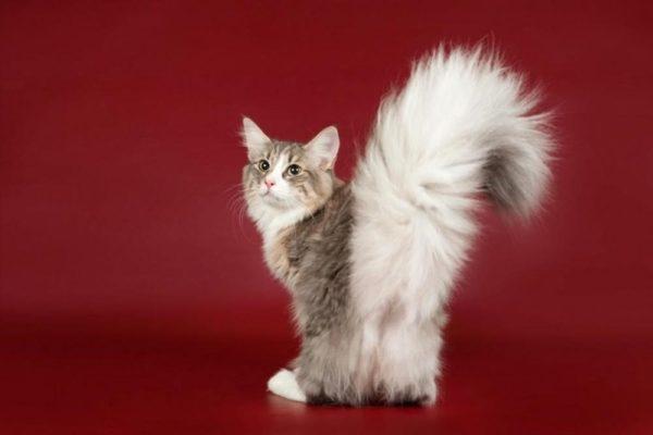 Зуд в области заднего прохода делает кошку нервной и даже агрессивной