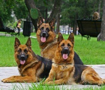 Лечь собака может различными способами, но лучше не позволять ей дурачиться во время тренировок