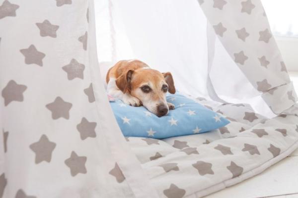 Закрытое место для собаки из мягкого материала