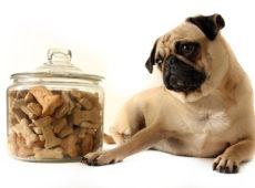 Собаке может не понравиться новый корм