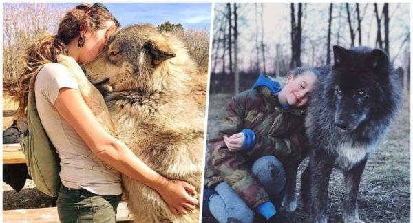 Гибрид собаки и волка