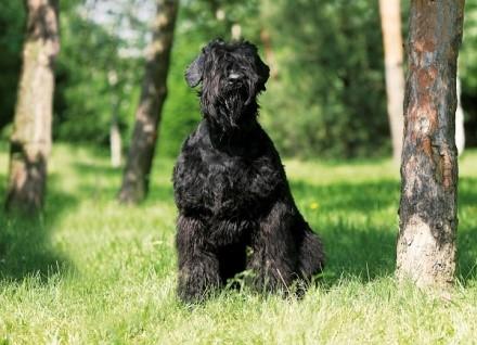 Эта собака - результат скрещения 15 различных пород