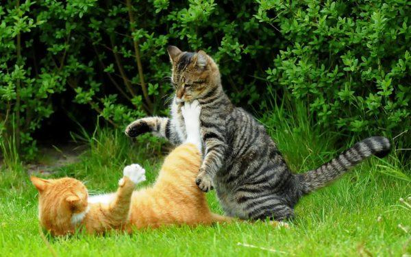 Во время активных игр коты часто травмируют глаза