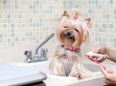 Чистить зубы собаке лучше в одном и том же месте, чтобы выработать привычку