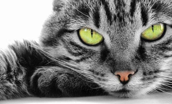 Кошки считаются хорошими психологами, отлично улавливающими настроение окружающих