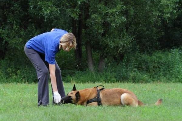 Используя лакомство, вы ускоряете процесс обучения и делаете его более эффективным за счет того, что доставляете собаке большую радость в виде гастрономического удовольствия