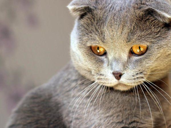Кошки относятся к категории обидчивых питомцев