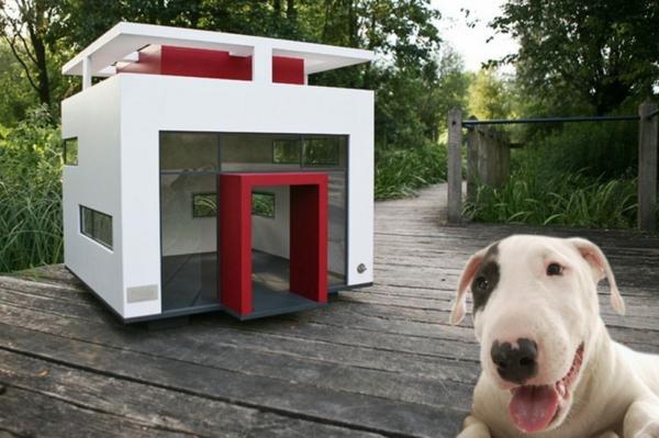 Современные домики для собак отличаются разнообразием