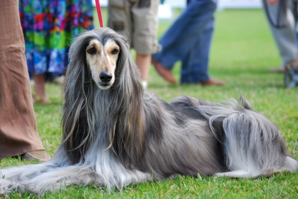 У собак насчитывают 7 типов шерсти