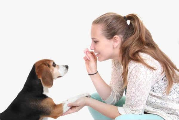 Нужно стремиться к доверию и взаимопониманию с собакой