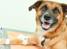 Самостоятельный подбор дозы инсулина для собак, больных диабетом, может обернуться смертью и страданием животного