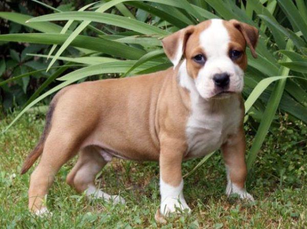 Психика маленького щенка – как чистый лист