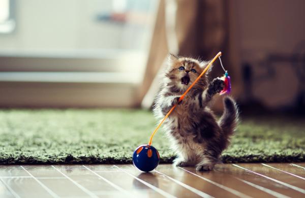 Котята познают мир не только на практике, но и через наблюдения