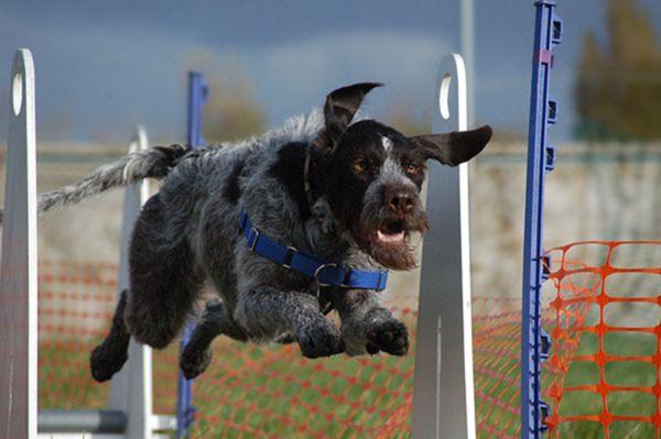 Агрессивно реагировать на действия собаки не допускается