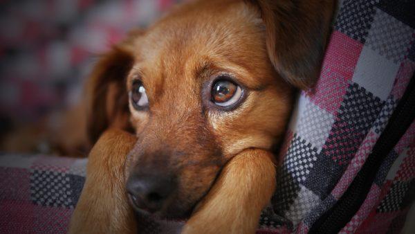 Вялость животного может быть тревожным симптомом