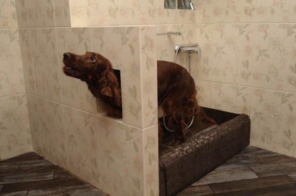 Мини-ванная для мытья четвероногих друзей