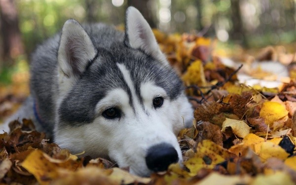 Лучше не заставляйте собаку ложиться на мокрую поверхность, ей будет неприятно, плюс, она может не только замараться, но и заболеть