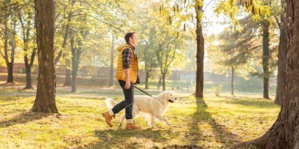 Заболевший пёс не должен контактировать с другими собаками