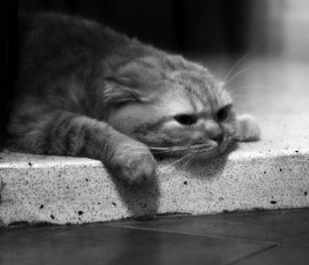 Кошки склонны впадать в депрессию