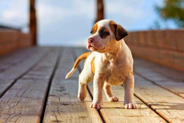 Воспитывать собаку нужно с первых дней её появления в доме