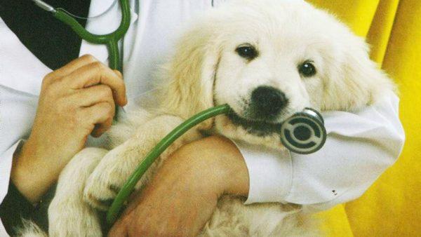 Курс лечения заболевания должен быть согласован с ветеринаром