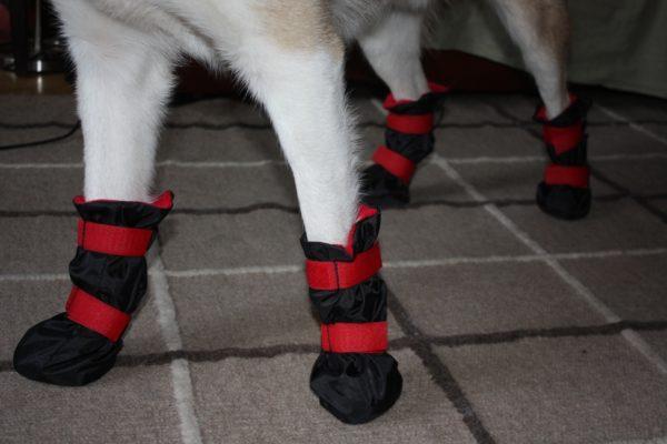 Обувь для собак — стильный аксессуар для защиты от травмирования лап