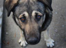Прямая связь между чипированием и поиском собаки отсутствует