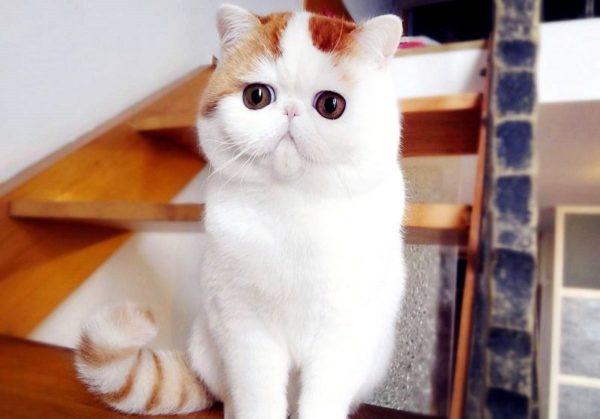 Японский кот Снупи