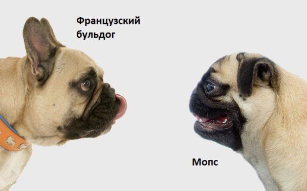 Разница собак при виде в профиль