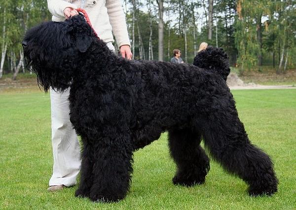 Эта собака сложена настолько атлетически, что, будь она человеком, могла бы стать и солдатом и подиумной моделью одновременно
