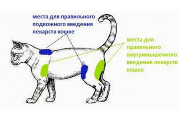 Схема мест на теле для внутримышечных и подкожных уколов
