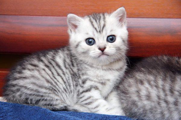 Использование препарата на котятах недопустимо