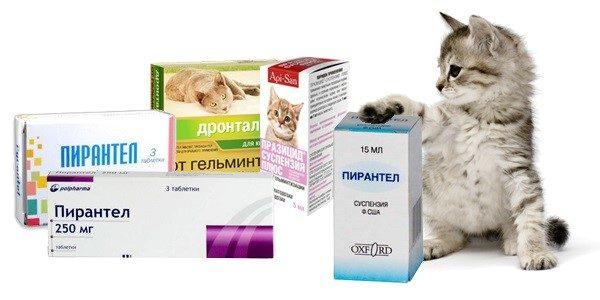Глистогонить кошек надо каждые три-четыре месяца