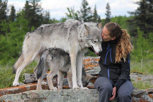 Дрессировкой волко-собак должны заниматься лица со специальным образованием