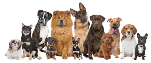 Фронтлайн Нексгард используется для собак различных пород