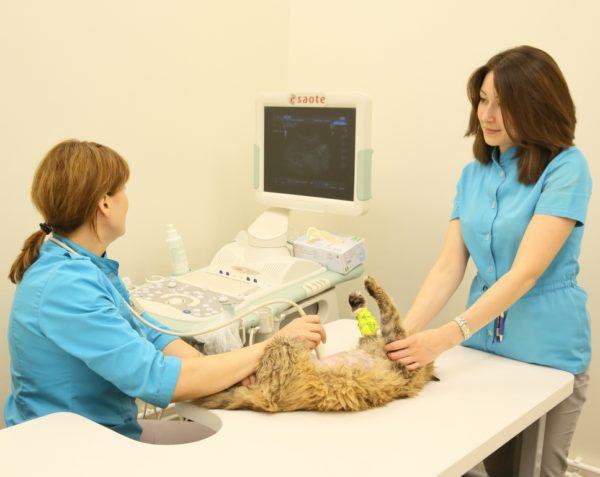 ЭхоКГ считается самым информативным способом диагностики ГКМП