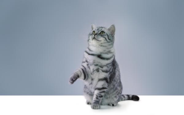 Чтобы кошка быстрее усвоила урок, необходимо чтобы она наслаждалась обучающим процессом