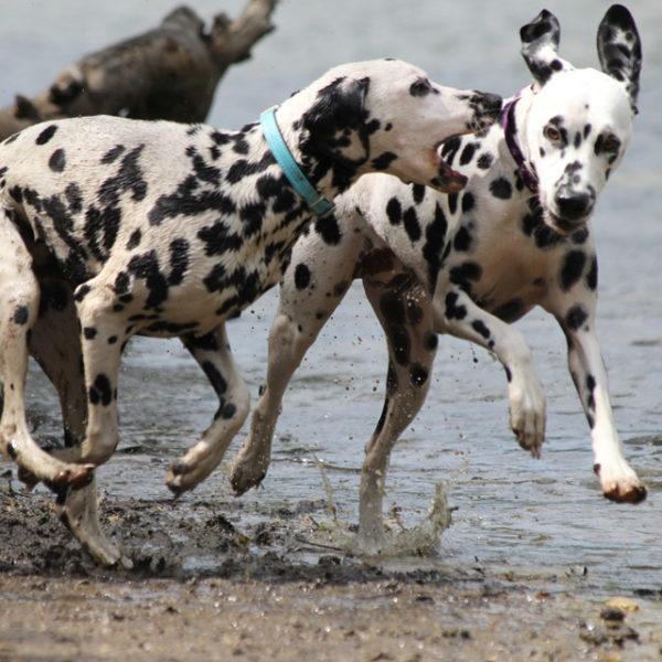 Главное требование – давать собаке достаточно движения