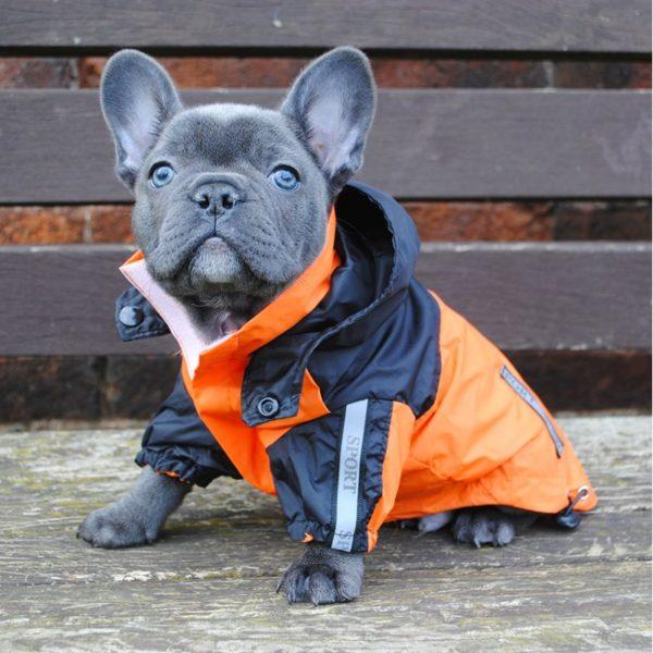 Чтобы короткошерстные питомцы не замерзали, хозяева покупают для них теплые куртки