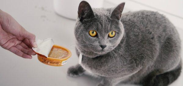 Чем правильно кормить кота британца и вислоухую британскую кошку