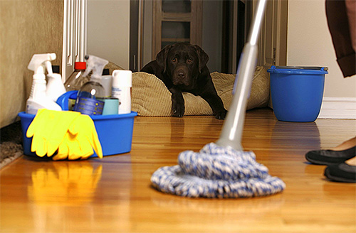 Как избавиться от запаха собаки в квартире?