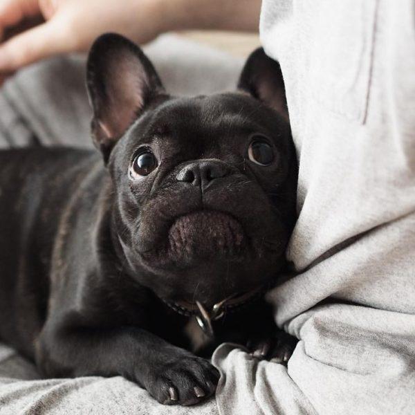 Собака легко борется со страхом при поддержке хозяина