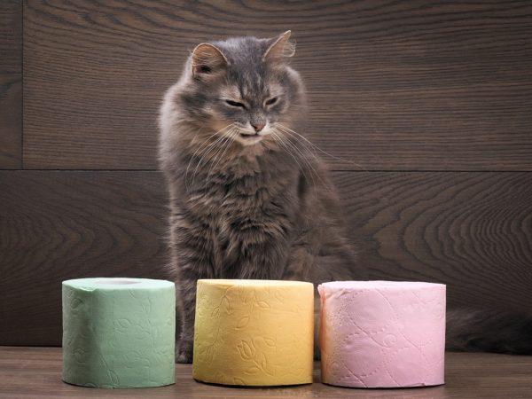 Не тяните с посещением ветеринара, если увидите у кота черный кал