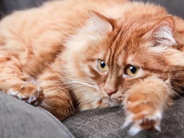 Если потемнение кала сопровождается учащенными походами в туалет, вероятно, что-то не в порядке с кишечником кота