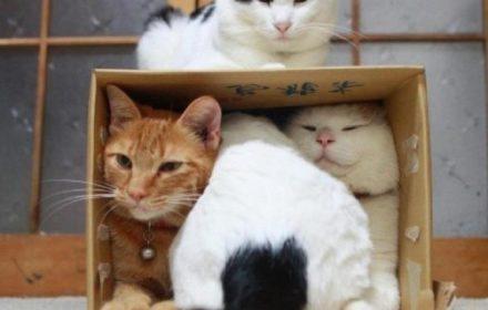 У питомца должно быть достаточно места в жилище