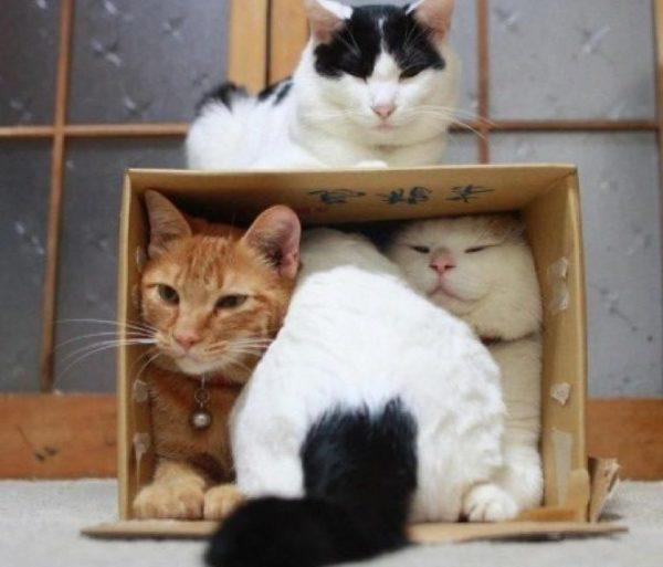 Игровой комплекс для котов своими руками пошаговая инструкция